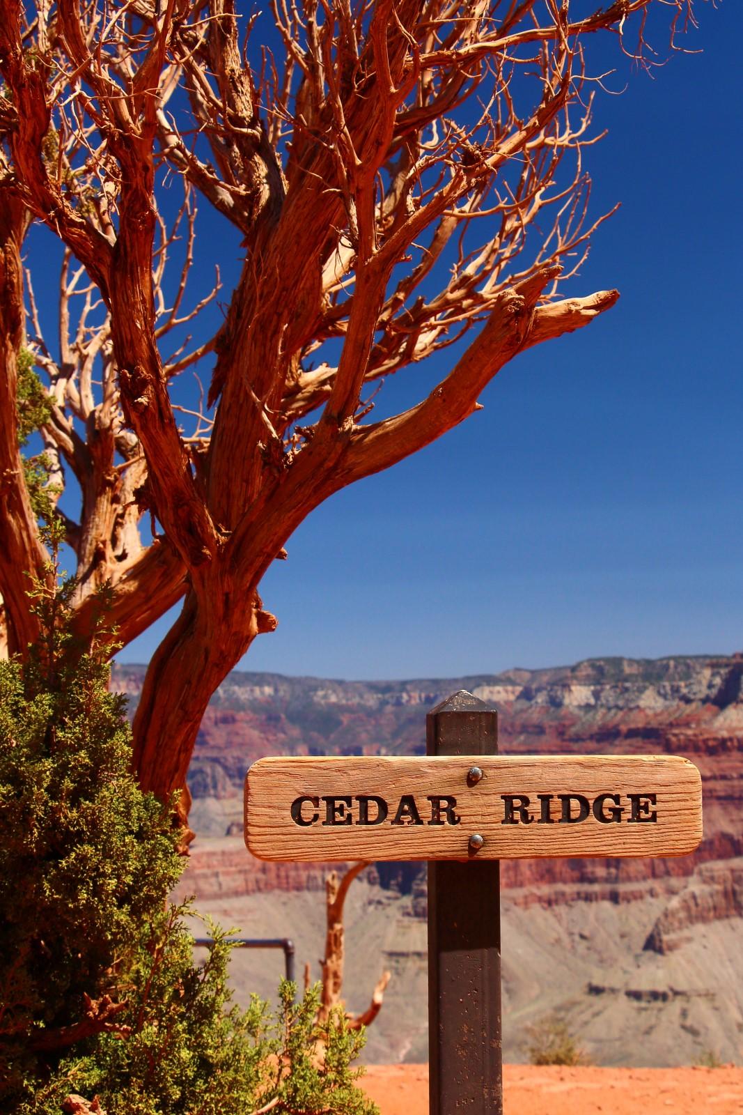 Cedar ridge south kaibab trail grand canyon for Ceder ridge